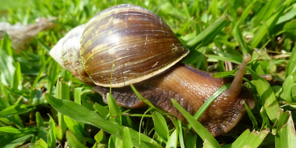 snail-grass-giant-shell-Never-Going-To-Be-approved.jpg